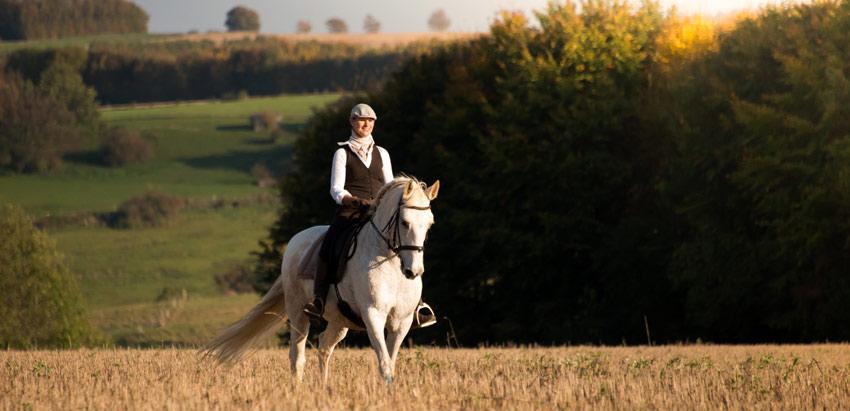 Pferde Ausbildung